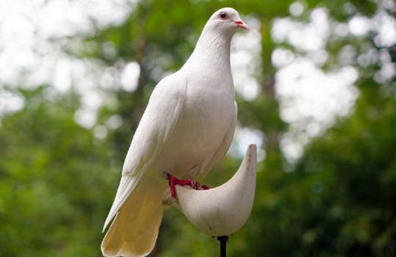 Symbol för fred